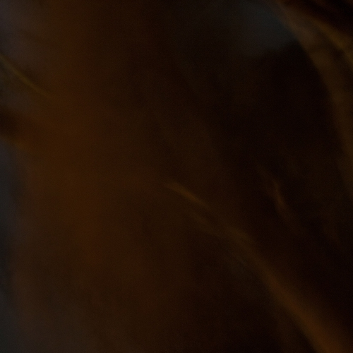 """""""El bosque en llamas # 2"""" de la serie """"El bosque en llamas"""" / Técnica: fotografía y composición digital / Dimensiones de la obra: cm."""
