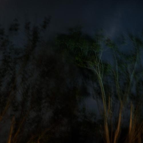 """""""El bosque en llamas # 1"""" de la serie """"El bosque en llamas"""" / Técnica: fotografía y composición digital / Dimensiones de la obra: cm."""