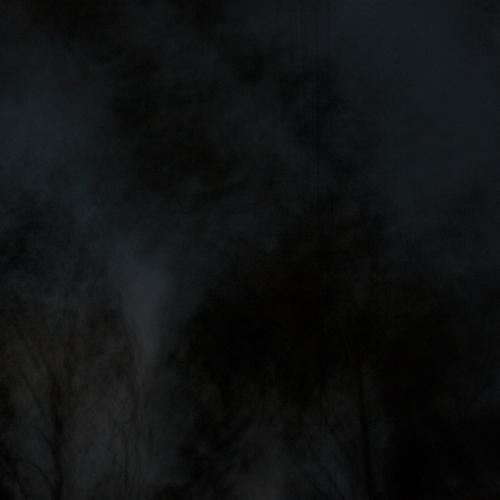 """""""El bosque en llamas # 4"""" de la serie """"El bosque en llamas"""" / Técnica: fotografía y composición digital / Dimensiones de la obra: cm."""