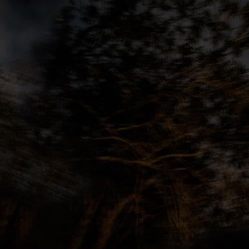 """""""El bosque en llamas # 6"""" de la serie """"El bosque en llamas"""" / Técnica: fotografía y composición digital / Dimensiones de la obra: cm."""
